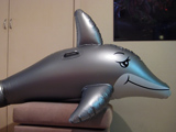 Royal Beach Dolphin