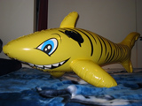 Unknown Yellow Shark